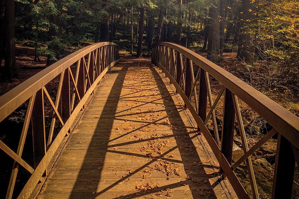 Cb Cook Forest Bridge2
