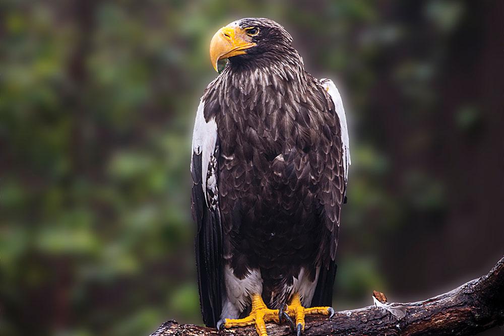 Sea Eagle Cg20