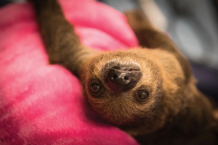 Sloth Mar18