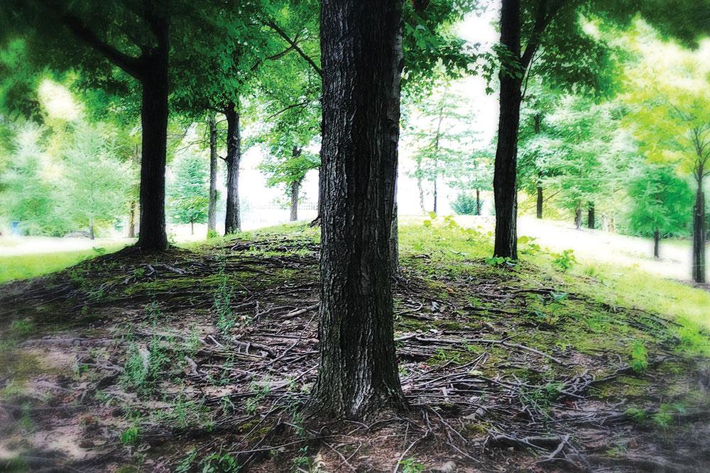 Trees Apr21
