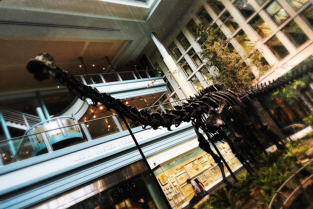 Diplodocus H Jul21